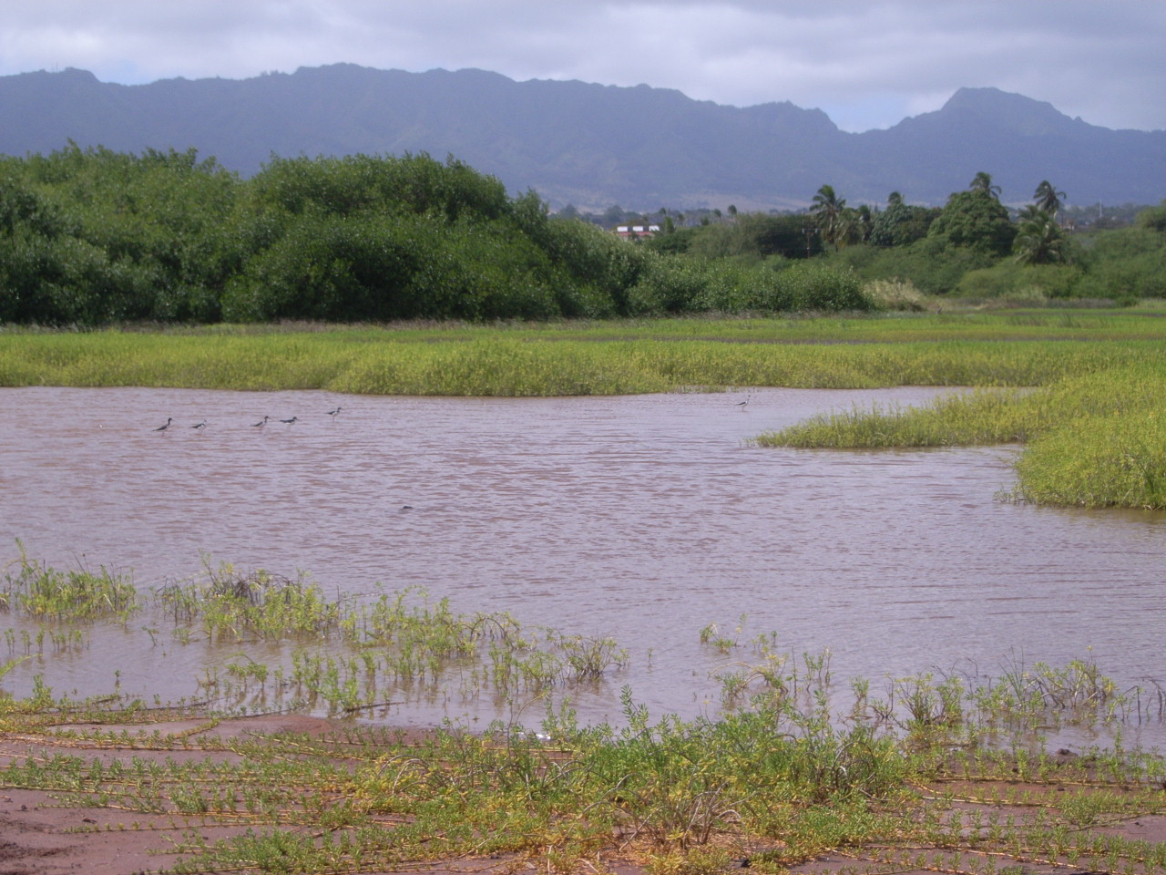 Pouhala Marsh | Oahu Forestry and Wildlife Program